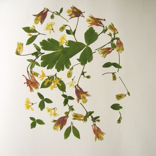 Flower profile