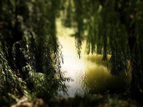 Willows 2 tiltshift-1