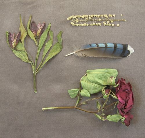 found objects, pressed flowers, pepper grass, blue feather
