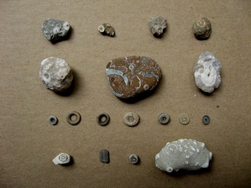 beach collections 3 the fossils bricolagelife 2011