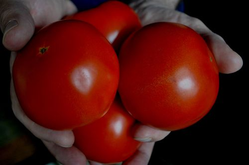 real tomatoes by bricolagelife 2011